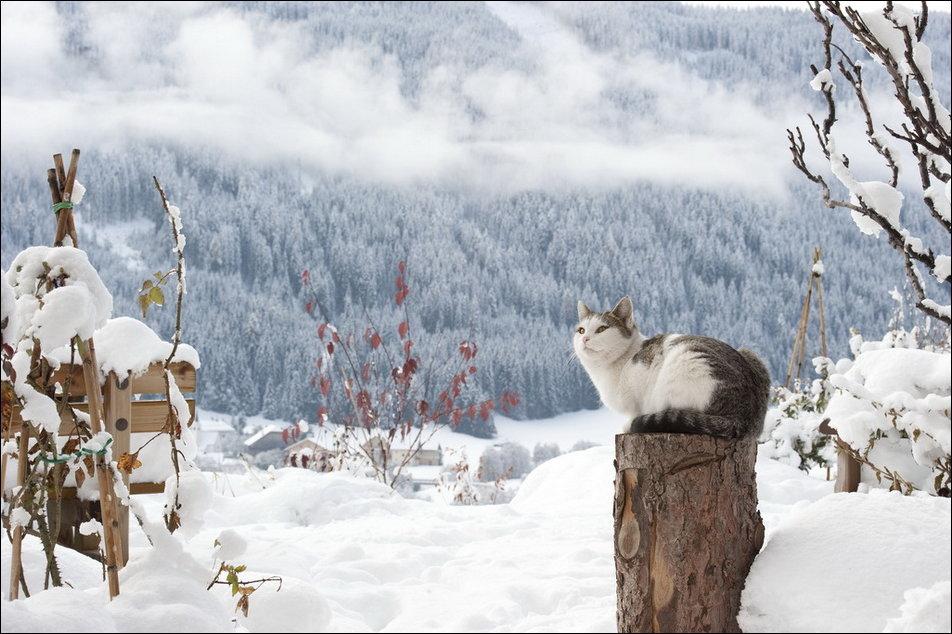 cat-in-snow-021.jpg