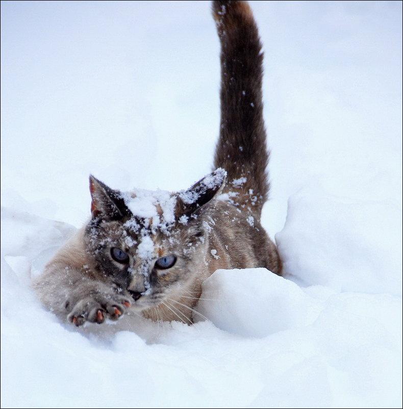 cat-in-snow-022.jpg