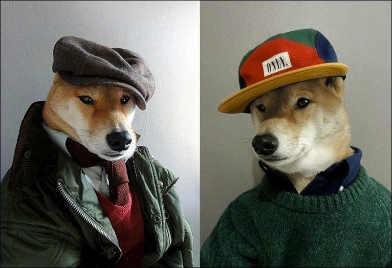 Самый стильный пес