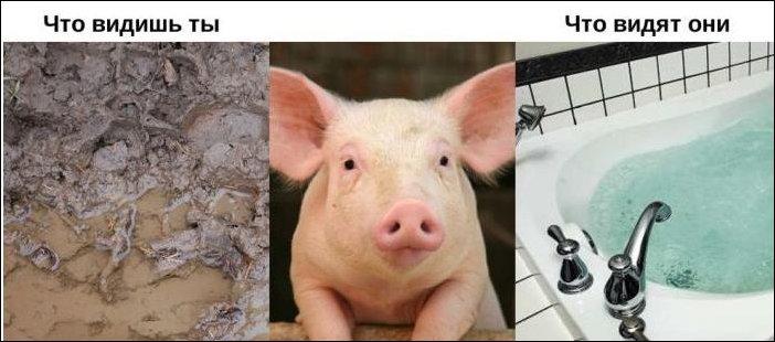 Глазами животных