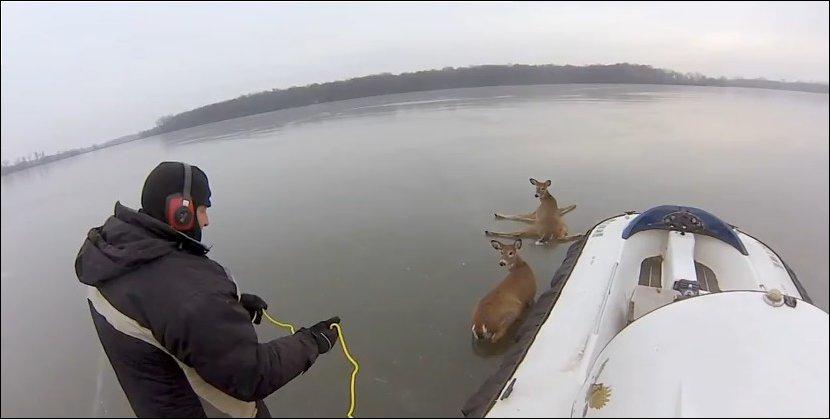 Спасение оленей на замерзшем озере