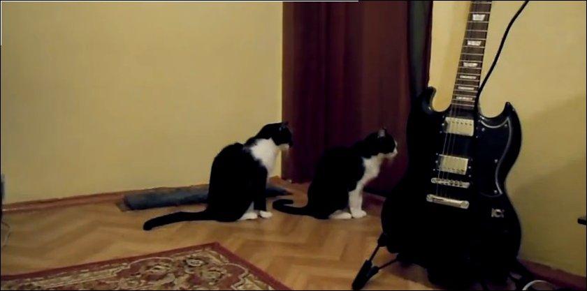 Кошка просит прощения