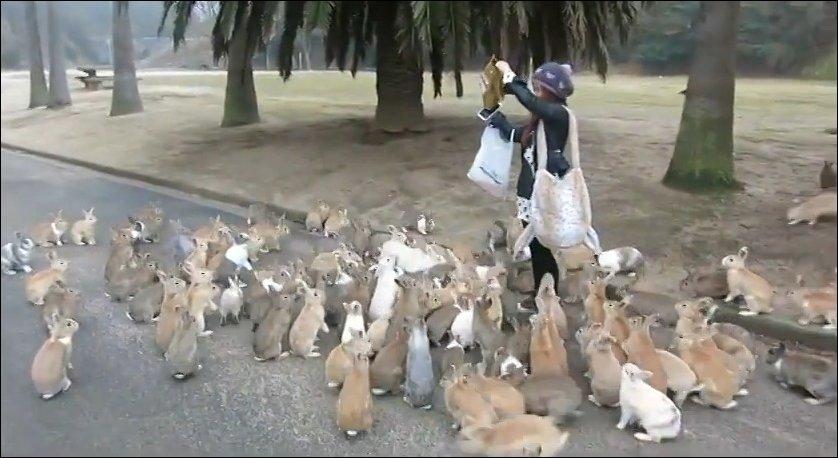 Попала в окружение кроликов