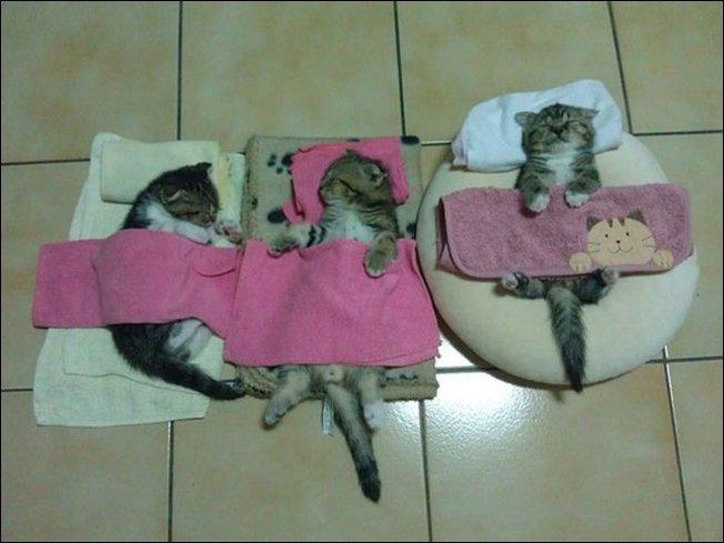 Спящие коты
