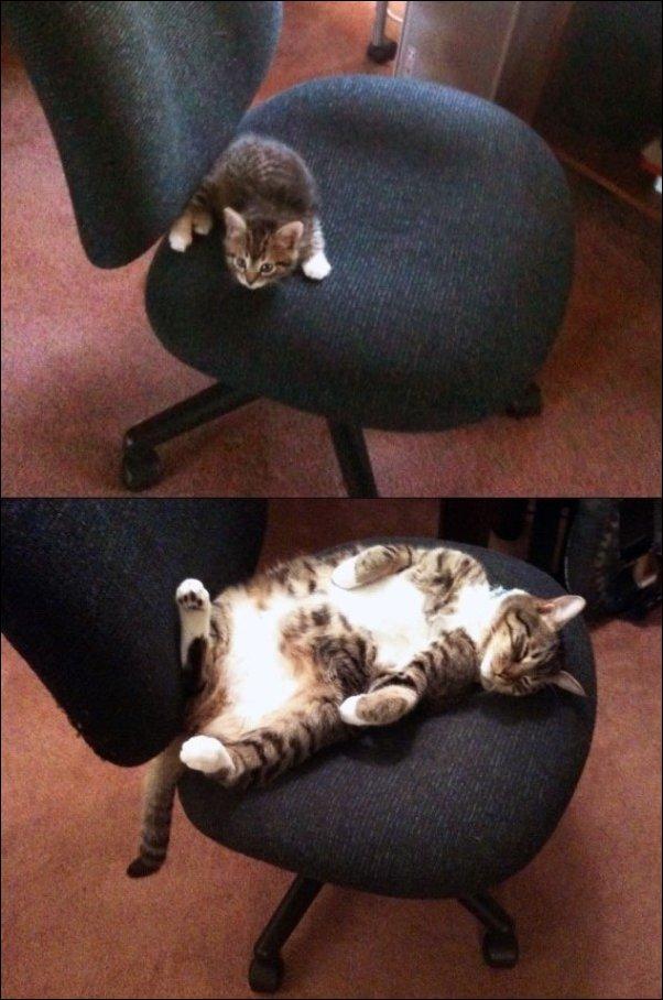 Коты тогда и сейчас