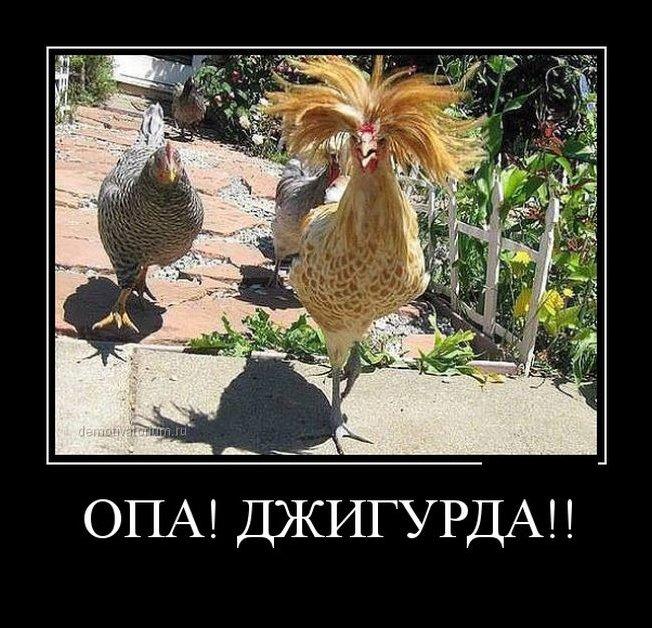 http://www.prikol.ru/wp-content/gallery/february-2015/demotivator-28012015-017.jpg