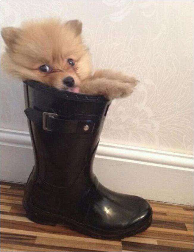 Собака сидит