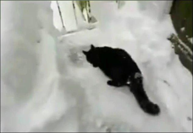 Кот нырнул с балкона в снег