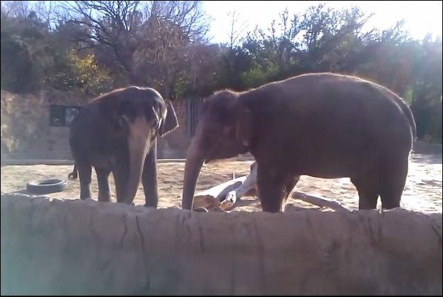 Слоник обиделся