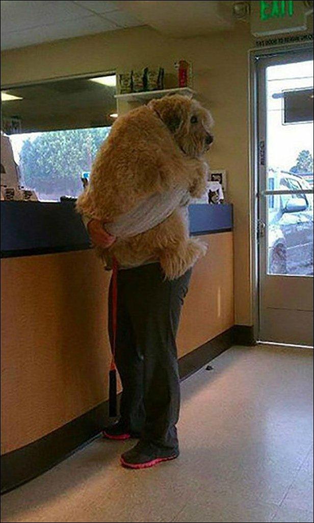 На приеме у ветеринара