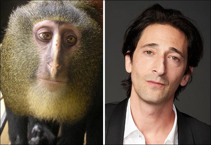 Животные похожи на знаменитостей
