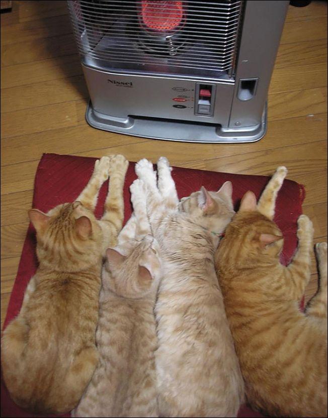 Тепло