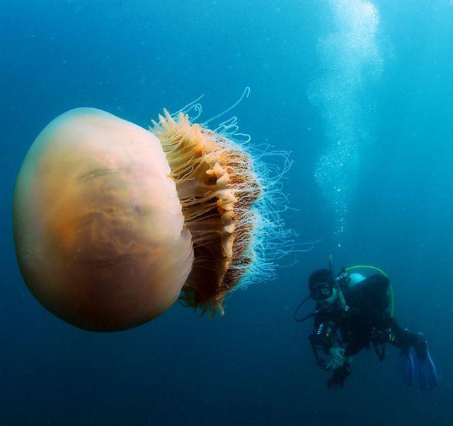 200kg-jellyfish-03