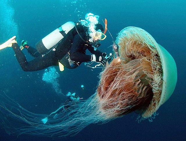 200kg-jellyfish-07