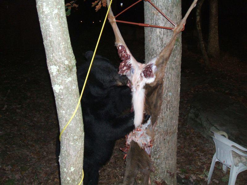 bear-vs-hunter-03