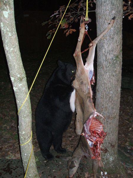 bear-vs-hunter-04