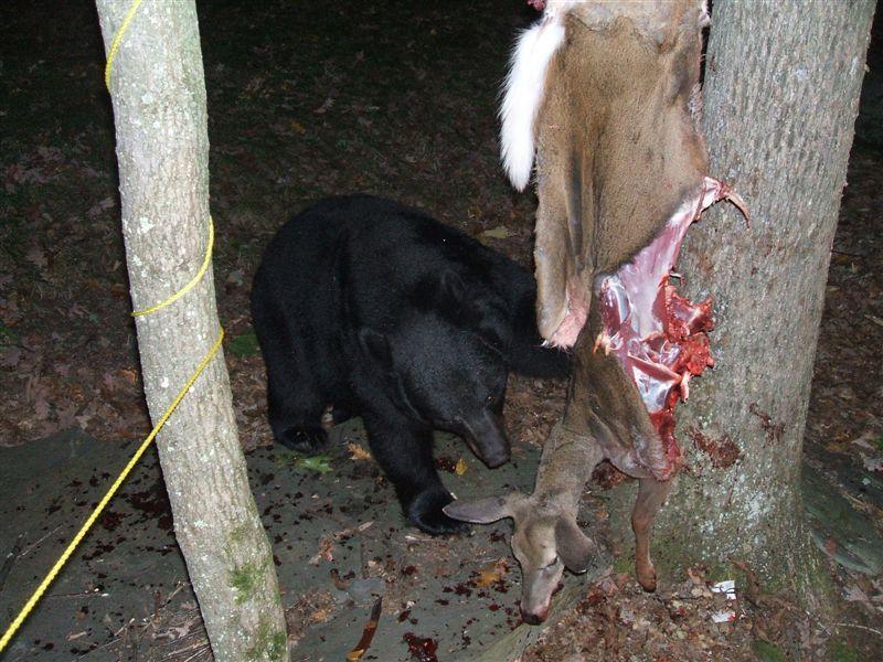 bear-vs-hunter-05