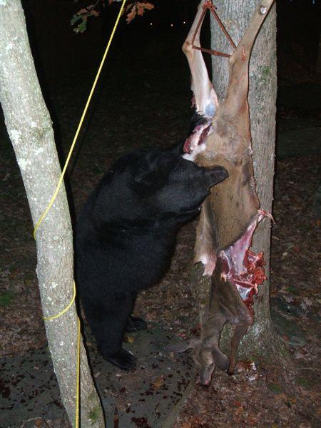 bear-vs-hunter-06
