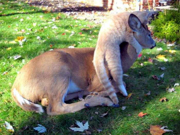 deer-and-cat-02