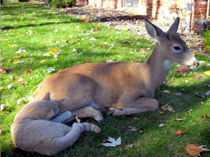 deer-and-cat-03