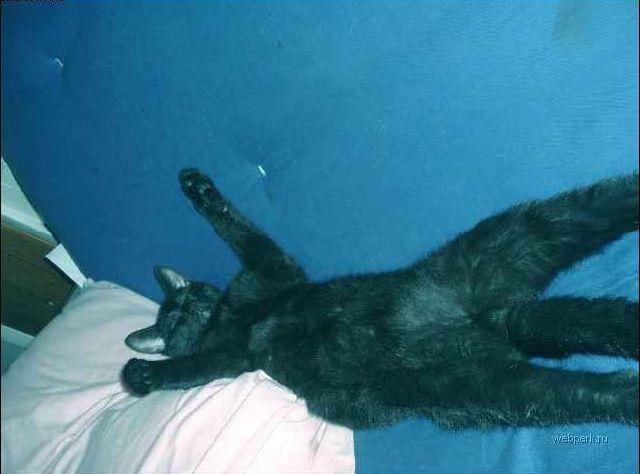 lazy-cat-01