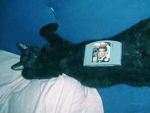 lazy-cat-02