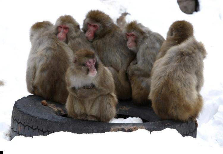 monkey-cold-01