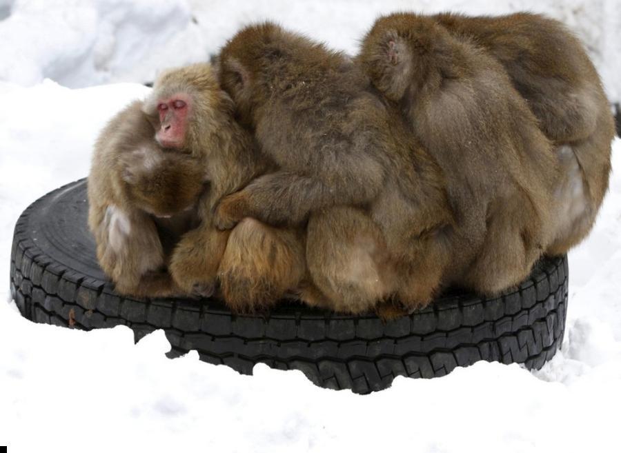 monkey-cold-02