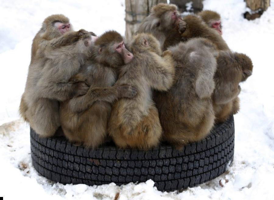 monkey-cold-03