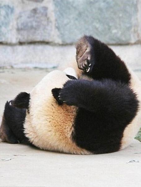 panda-sleeping-fail-04