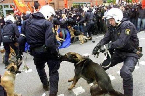 police-fail-29