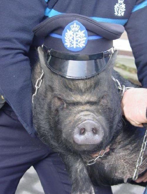 police-fail-33