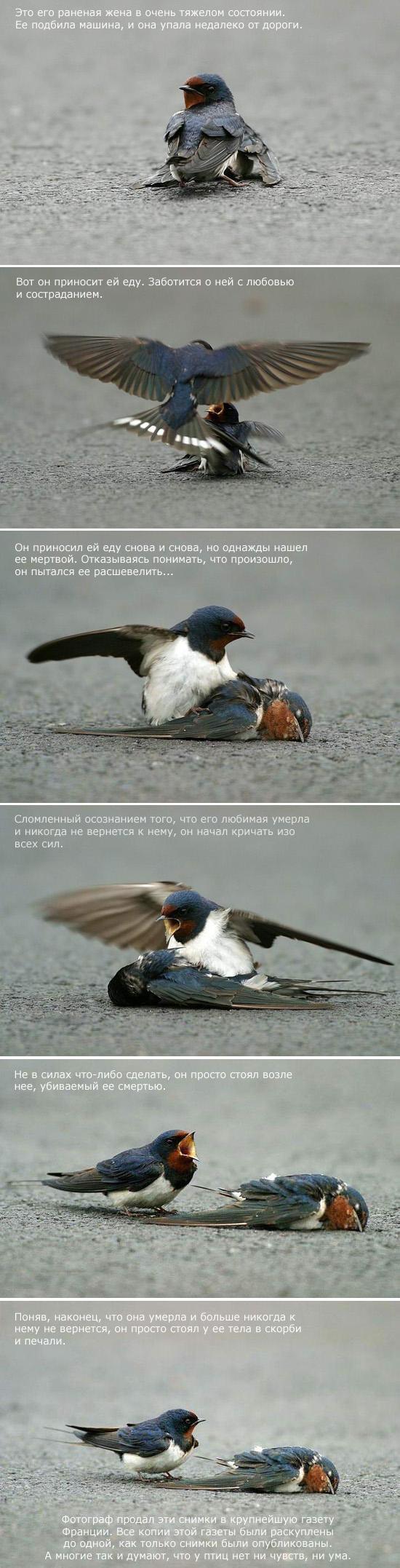 sad-story-about-bird-02