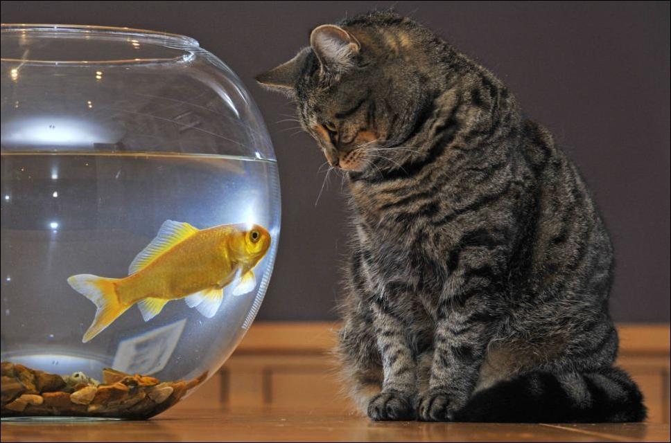 Смешные фото рыбок в аквариуме