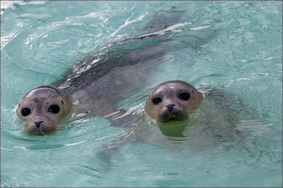 Спасение маленьких тюленей