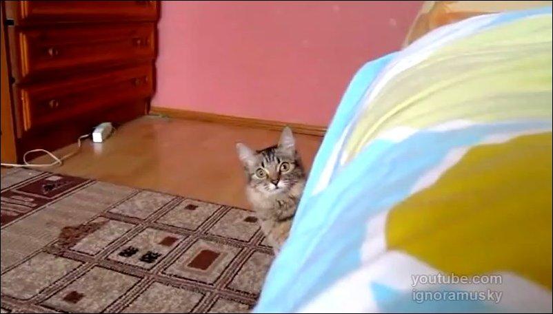 Кот что-то задумал