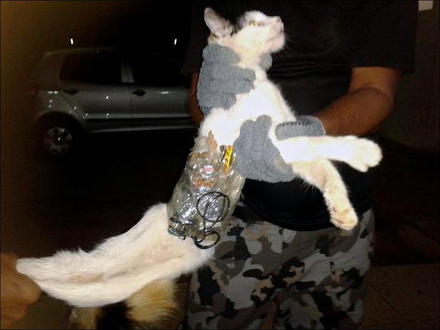 Кот-контрабандист