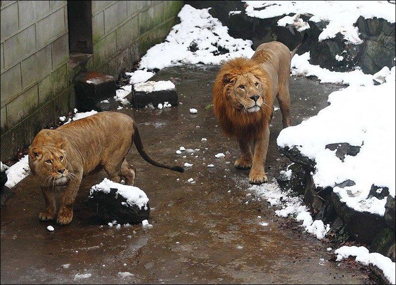 Львов закидали снежками