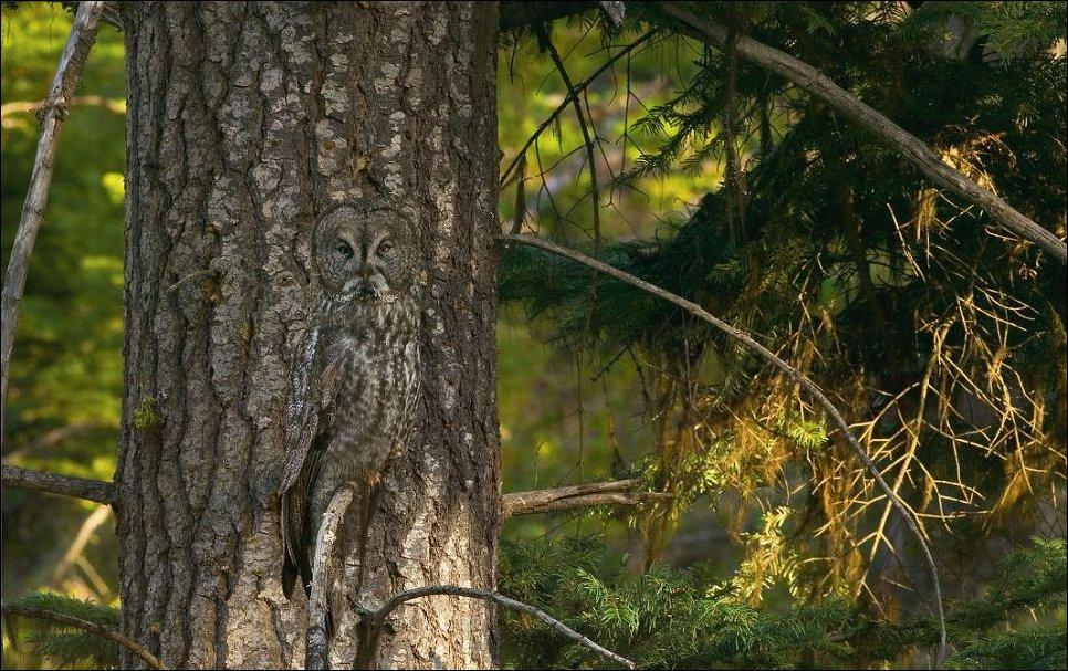 Природная маскировка животных
