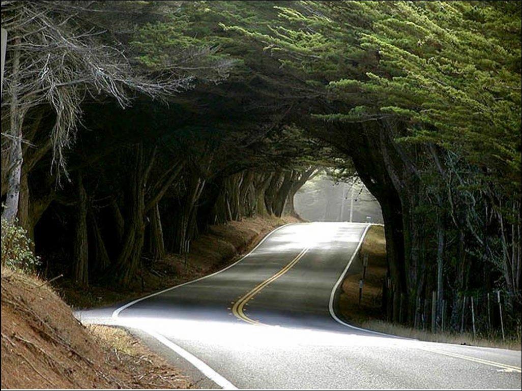 Тоннели из деревьев