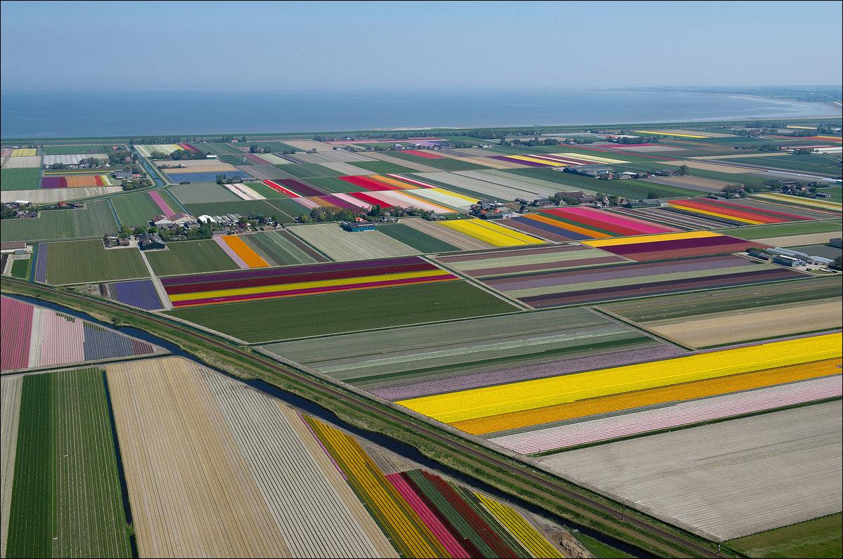 Поля тюльпанов с высоты птичьего полета