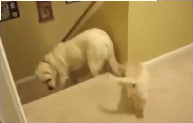 Главное отличие собак от котов