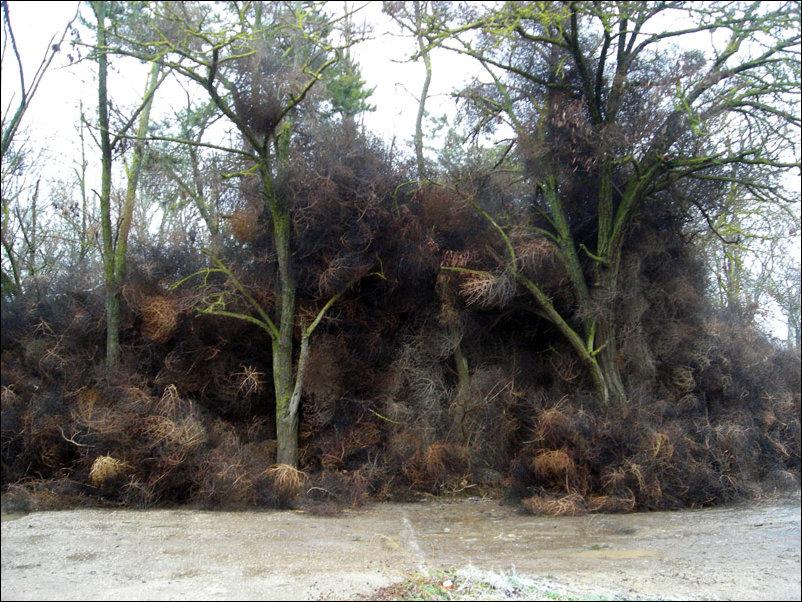 Поселок в Крыму завалило перекати-поле