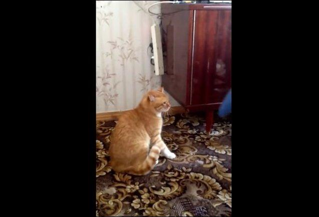 Кот мститель