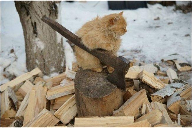 Коты сфотографированные в нужный момент