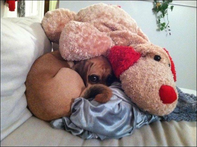 Собаки которые не умеют прятаться