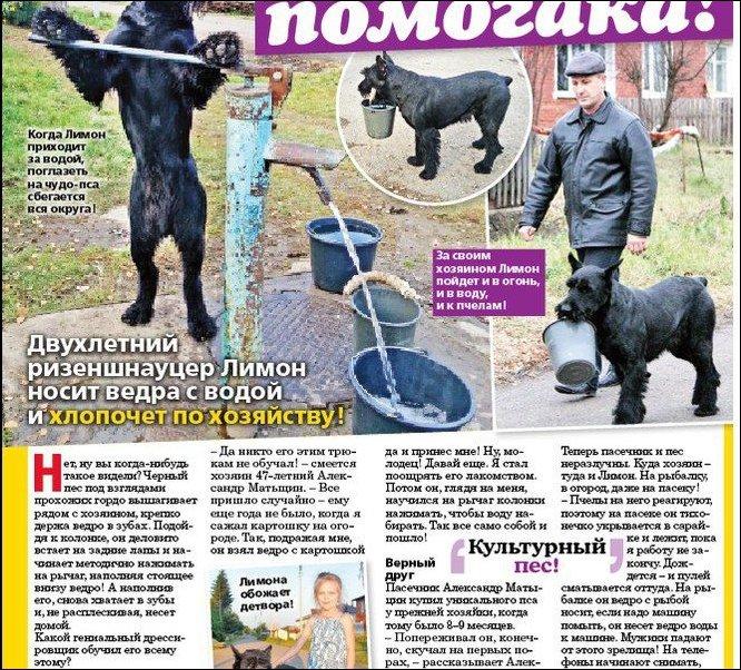 Хозяйственный деревенский пес