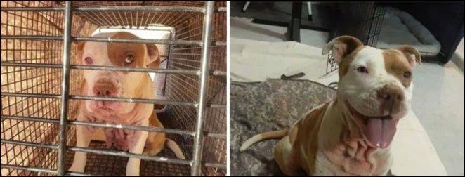 Животные до того как их забрали из приюта и после