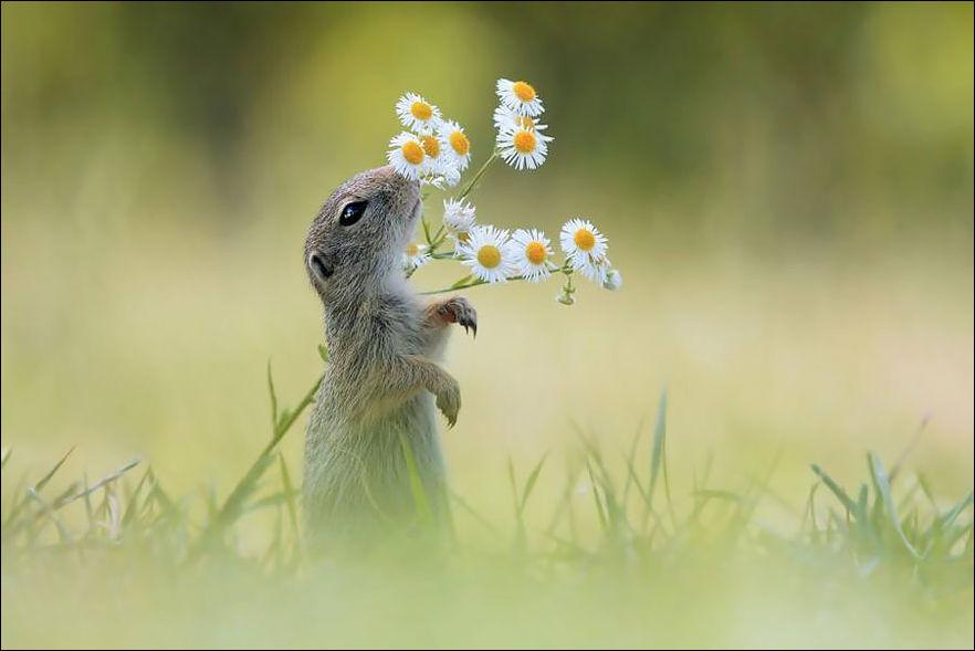 Животные нюхают цветы