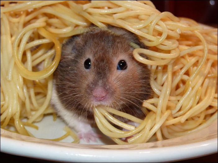 Животные и еда